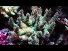David Saxby's Reef Aquarium 2008 (High Definition version) - YouTube