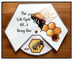 """Science Activities: 4 different life cycle of a honey bee """"wheels"""" depict the 4 stages of the bee's life cycle. Patterns come in color & black & white. Fun way to """"turn & learn"""". Bees For Kids, Bee Crafts For Kids, Bee Activities, Sequencing Activities, Children Activities, Bee Life Cycle, Crown Crafts, Fall Preschool, Save The Bees"""