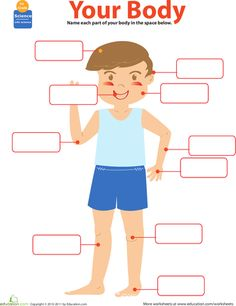 Your Body Labeling Worksheet