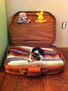Travel dog bed - put all your dogs toys, food, dishes etc in it when youre traveling than just unzip it and its a dog bed! Travel dog bed - put all your dogs toys, food, dishes etc in it when youre traveling than just unzip it and its a dog bed! Positive Dog Training, Training Your Puppy, Training Dogs, Diy Dog Bed, Pet Beds, Dog Behavior, Dog Supplies, Dog Care, Rescue Dogs