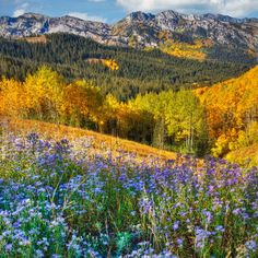Autumn in the Wasatch Mountains, Utah