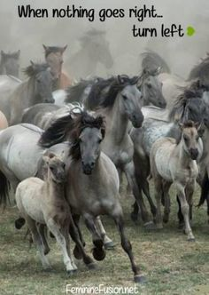 by Karen van Gerner A group of wild horses galloping right in my direction. Location: Germany, Dülmen (i love this picture! All The Pretty Horses, Beautiful Horses, Animals Beautiful, Horse Photos, Horse Pictures, Animals And Pets, Cute Animals, Horse Galloping, Majestic Horse