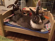 Bunny hosts a slumber party - July 10, 2018
