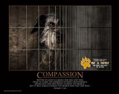COMPASSION - Richard C. Call Animal Shelter, Animal Rescue, Awesome Dogs, Dog Quotes, Shelters, Compassion, Pet Adoption, Best Dogs, Positivity