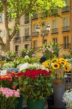 ❤Flowers for Sale on Market Day in Aix-En-Provence, France ❤