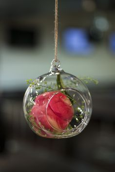 Our peonies bloomed in these hanging baubles. The perfect way to decorate a pop up flower bar. Bloom And Wild, Flower Subscription, Flower Bar, Floral Banners, Our Wedding, Wedding Ideas, Flowers Delivered, Pop Up Shops, Centrepieces