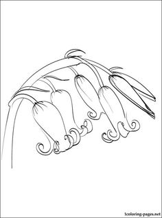 Bluebell coloring page for free | Coloring pages
