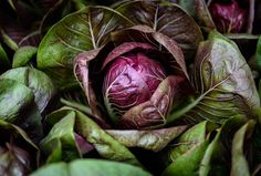 Cabbage - This photo was taken in the Chicago Botanic Garden fruit and vegetable section.  It was edited using LR6.