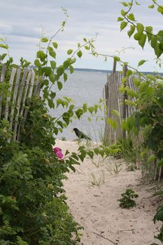 Beach Combing, Falmouth, Cape Cod, Mass