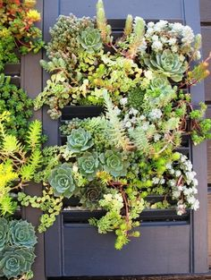 All Gardenista Garden Design Inspiration Stories in One Place Wonder if we could grow succulents in the shutters while they are still serving their original purpose? (via Debra Prinzing) Vertical Succulent Gardens, Vertical Garden Diy, Succulent Wall, Succulent Gardening, Planting Succulents, Container Gardening, Succulent Plants, Vertical Farming, Cacti Garden