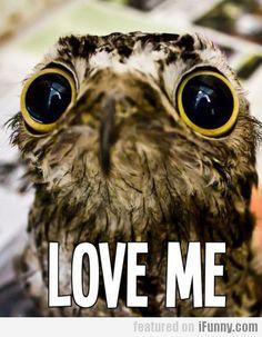 Love Me! Awwww!!!