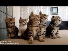 Dancing Kitten Chorus Line Is Mandatory Viewing