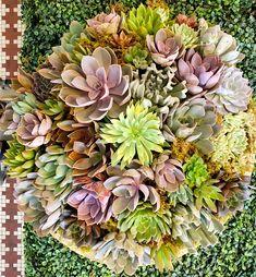 Succulents Flower Studio, Catus, Floral Arrangements, Succulents, Flowers, Plants, Flower Arrangement, Flower Arrangements, Succulent Plants
