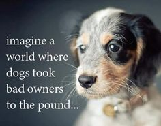 Imagine....a lot of people would be at the pound. And really...there is such a thing. Except it's a prison and its usually for animal abuse.