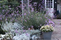 Fru Pedersens have: Kæmpeverbena et kæmpe hit. Verbena, Planters, Garden, Rest Area, Inspiration, Biblical Inspiration, Garten, Lawn And Garden, Plants
