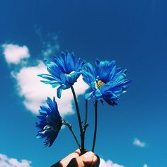 blue, flowers, and sky image Blue Aesthetic Dark, Rainbow Aesthetic, Aesthetic Colors, Aesthetic Pictures, Flower Aesthetic, Blue Wallpaper Iphone, Blue Wallpapers, Aesthetic Backgrounds, Aesthetic Wallpapers