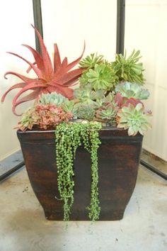 Simply Succulent Plant Designs