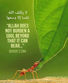 Allah does not charge a soul except [with that within] its capacity.