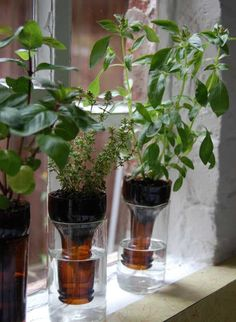 A no-fuss recycled windowsill herb garden. Self-watering planters like these aren't a new idea. This version looks nice & works great for small herbs and plants. Empty beer bottles or make a larger garden with wine bottles. Herb Garden In Kitchen, Kitchen Herbs, Garden Farm, Garden Web, Gravel Garden, Bean Garden, Water Garden, Garden Plants, Indoor Plants