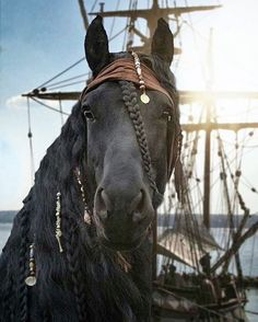 """Captain Jack Sparrow"" … bitte … lol – Horses – # ""Captain Jack Sparrow"" … bitte … lol – Horses – # - Art Of Equitation All The Pretty Horses, Beautiful Horses, Animals Beautiful, Cute Horses, Horse Love, Horse Halloween Costumes, Horse Halloween Ideas, Animals And Pets, Cute Animals"