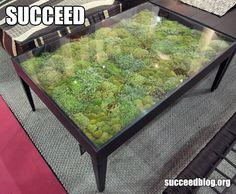 This is just genius. urban garden succeed-idea for indoor fairy garden?  WOW!!!!!!!!!!!!!!!!!!