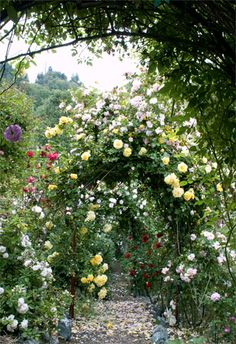 Secret Garden of Arbors covered with Climbing Roses