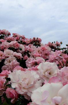 ''A vida é bela quando você se empenha em encontrar beleza nela.'' (Élder Richard G.Scott)