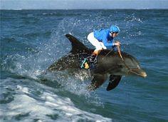 And... it looks like Flipper has taken the lead in the Kentucky Derby.