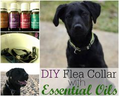 This DIY Essential Oil Flea Collar is the perfect way to keep the pests at bay on your furbaby!