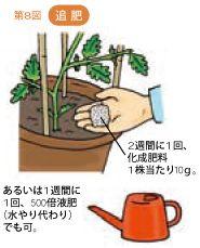 トマトの育て方 植え付けと支柱 暇人主婦の家庭菜園 かぼちゃ