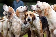 only thing better than a hound dog...  more hound dogs.