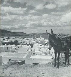 Mykonos in the Vintage Pictures, Old Pictures, Greece History, Old Time Photos, Greece Pictures, Greece Photography, Mykonos Island, Mediterranean Architecture, Paros