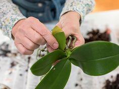 Indoor Flowers, Indoor Plants, Green Garden, Garden Plants, Cactus Care, New Roots, Special Flowers, Garden Projects, Garden Inspiration