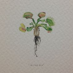 Day 180 : We used to have a venus fly trap called Sid. As with most things…