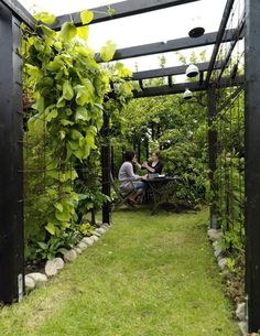 Urban Garden Design 40 Awesome Wall Climbing Plants Ideas For Your Backyard Design Outdoor Pergola, Backyard Pergola, Backyard Landscaping, Pergola Carport, Pergola Kits, Backyard Ideas, Pergola Lighting, Pergola Screens, Corner Pergola
