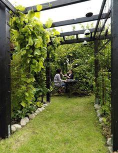 Inspiration till att bygga pergola! När februarisolen tittar fram börjar det klia i fingrarna inför vårens trädgårdsprojekt. Nu längtar vi bara efter sol och värme, men senare i sommar tackar man sig gärna för trädgårdens skuggiga…