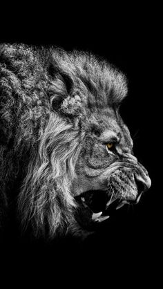How To Stay Driven For Success . How to stay driven for success stay hungry for success quotes - Hungry For Success Quotes Beautiful Creatures, Animals Beautiful, Beautiful Cats, Beautiful Images, Motivational Picture Quotes, Quotes Quotes, Stay Quotes, Inspirational Quotes, Lion Wallpaper