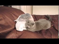 This Inquisitive Kitty Just Messed Around With the Wrong Bag!