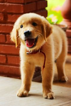 fluffy pup...adorable