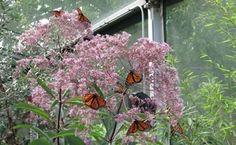 O segredo é não correr atrás das borboletas. É cuidar do jardim para que elas venham até você.