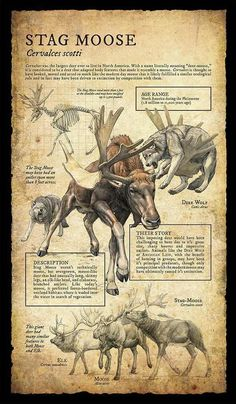 Design and Illustration for extinct, prehistoric animal specimens and fossils, natural history museum signage. Prehistoric Wildlife, Prehistoric World, Prehistoric Creatures, Mythological Creatures, Fantasy Creatures, Mythical Creatures, Dinosaur Art, Extinct Animals, Cryptozoology