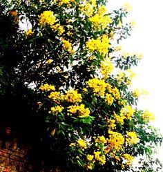 A Amizade desenvolve a Felicidade, duplicando a alegria e dividindo as tristezas......Assim são as flores, multiplicam sua beleza e dividem o seu perfume....