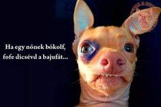 French Bulldog, Funny, Dogs, Animals, Animales, Animaux, French Bulldog Shedding, Pet Dogs, Bulldog Frances