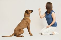 Easy Dog Training Tips - Comparing Real-World Training For Dogs Programs - Knowded Dog Commands Training, Dog Training Courses, Dog Training Methods, Dog Training Techniques, Training Plan, Good Citizen, Different Dogs, Animals Of The World, New Puppy