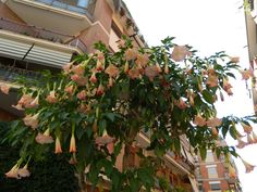 Beautiful Tree in Rome