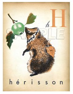 H is for Hedgehog. And not only in French!