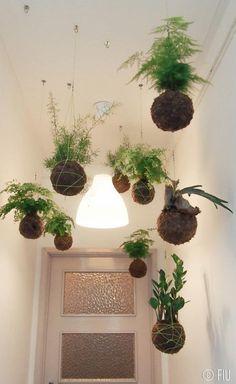 flying plants