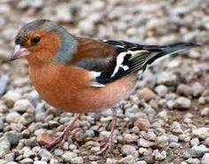 Výsledek obrázku pro ptáci