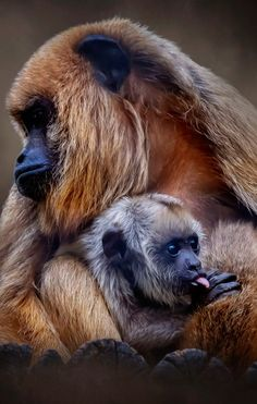 Large Animals, Animals And Pets, Baby Animals, Funny Animals, Cute Animals, Amazing Animal Pictures, Wild Animals Pictures, Cute Animal Pictures, Primates