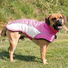 Winter Dog Coat with Soft Fleece Padding Protect Against Cold, Reflective Piping for More Security